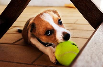 puppy-play-balls-dog-pet-animal-cute-naughty
